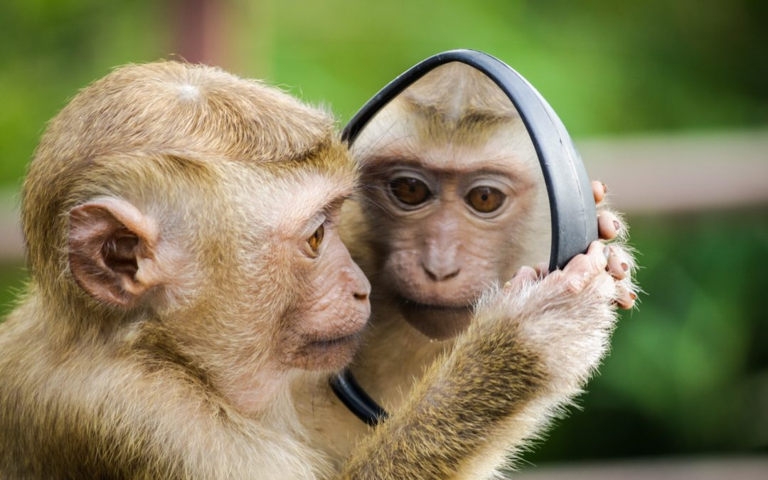 Monkey Mind & the Importance of Prioritizing Self Care
